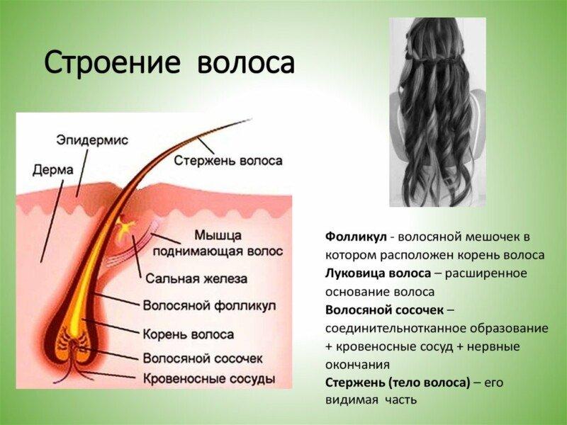 от выпадения и роста волос